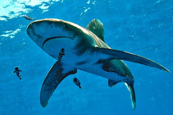 Le vacanze e la teoria del pesce pilota