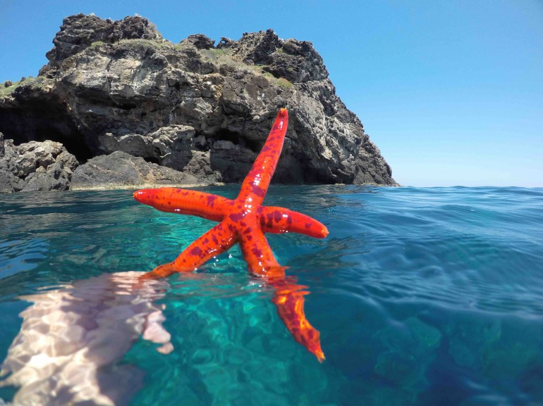 Ustica: la nostra stella marina