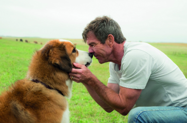 10 bambini al cinema a vedere Qua la zampa e il ricordo del mio cane