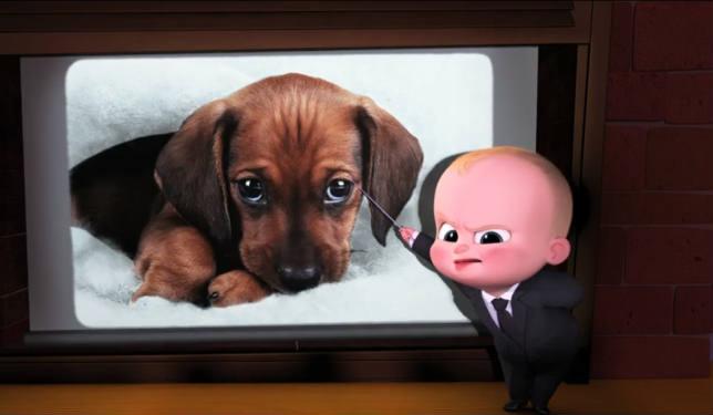 Baby Boss: Bambini sostituiti da cuccioli di cane